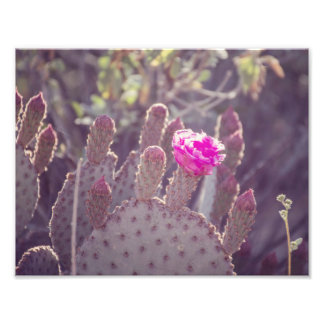 Impresión de la foto de la flor el   del cactus cojinete