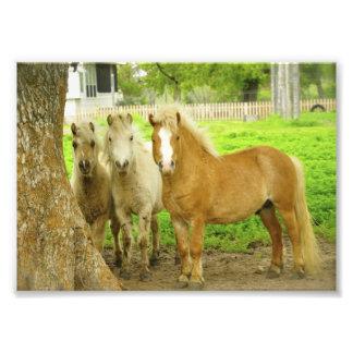 Impresión de la foto de la granja del caballo de t