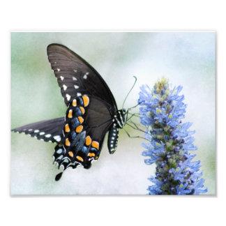 Impresión de la foto de la mariposa de Spicebush S Cojinete