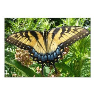 Impresión de la foto de la mariposa de Swallowtail