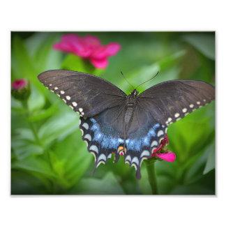Impresión de la foto de la mariposa fotografía