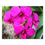 Impresión de la foto de la orquídea