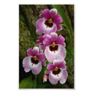 Impresión de la foto de la orquídea de pensamiento