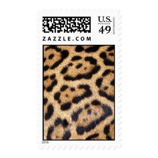 Impresión de la foto de la piel de Jaguar Franqueo