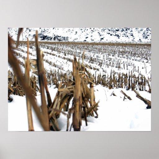Impresión de la foto de la poesía del campo de maí póster