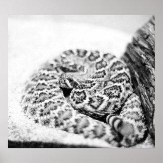 Impresión de la foto de la serpiente de cascabel p posters