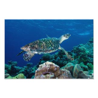 Impresión de la foto de la tortuga de mar de Hawks Cojinete