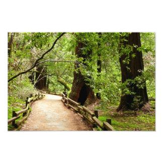 Impresión de la foto de la trayectoria de maderas