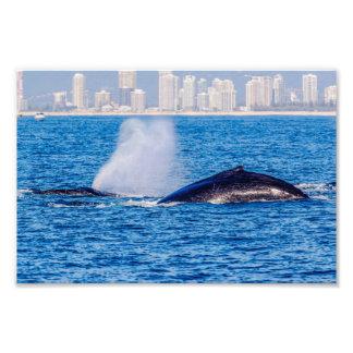 Impresión de la foto de las ballenas jorobadas