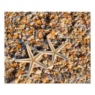 Impresión de la foto de las estrellas de mar y de fotografía