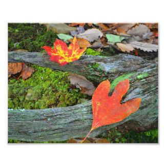 Impresión de la foto de las hojas de otoño cojinete