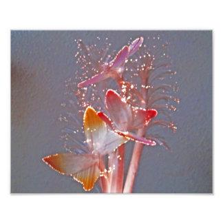 Impresión de la foto de las mariposas de la fibra