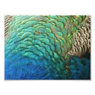Impresión de la foto de las plumas del pavo real