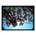 Impresión de la foto de las ramas 24x20 del azul