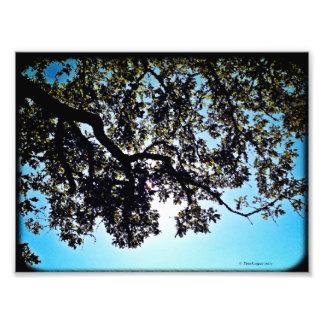 Impresión de la foto de las ramas del azul