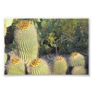 Impresión de la foto de los cactus de barril cojinete