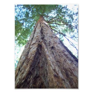 Impresión de la foto de los triángulos del árbol