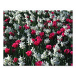 Impresión de la foto de los tulipanes 16