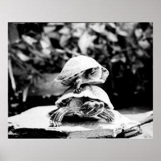 Impresión de la foto de TurtleStack por Randomwhat Póster