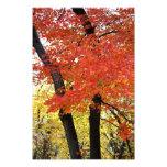 Impresión de la foto del árbol de arce