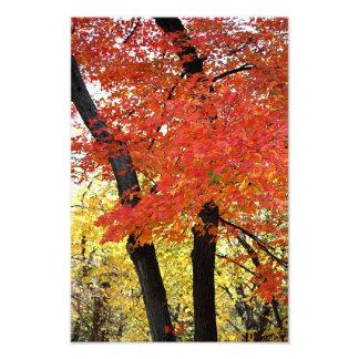Impresión de la foto del árbol de arce cojinete