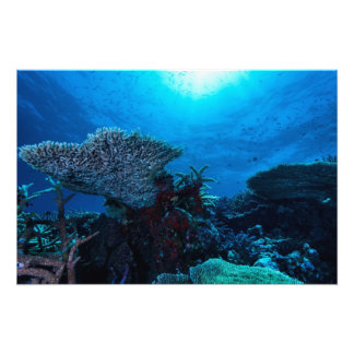 Impresión de la foto del arrecife de coral cojinete