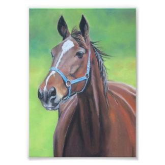 Impresión de la foto del arte del caballo de Hanno Cojinete