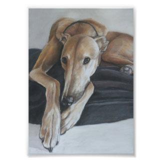Impresión de la foto del arte del perro del galgo