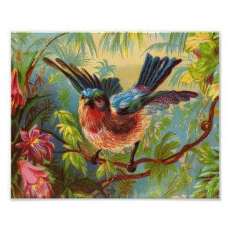 Impresión de la foto del Bluebird del verano Fotografías