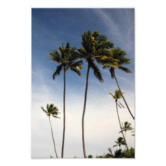 Impresión de la foto del Brasil de los árboles de