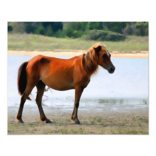Impresión de la foto del caballo de los bancos de  cojinete