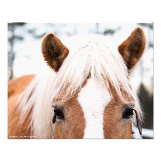 Impresión de la foto del caballo fotografías