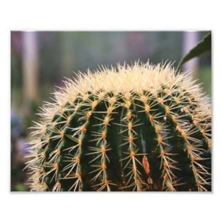 Impresión de la foto del cactus fotografías