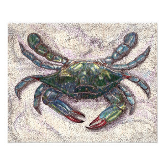 Impresión de la foto del cangrejo azul de la bahía fotografía
