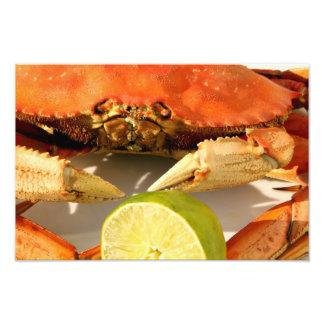 Impresión de la foto del cangrejo de Dungeness Cojinete