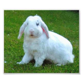 impresión de la foto del conejo fotografía