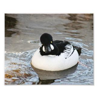 Impresión de la foto del _del pato de Mandrin Cojinete