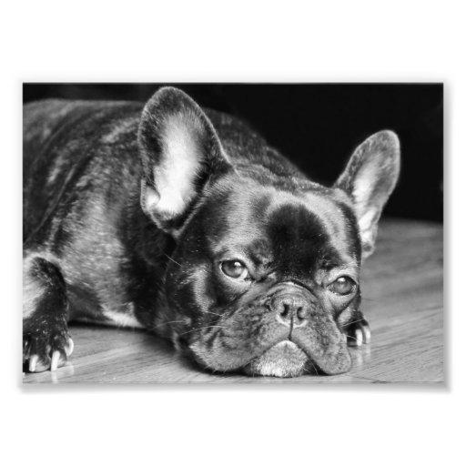 Impresión de la foto del dogo francés