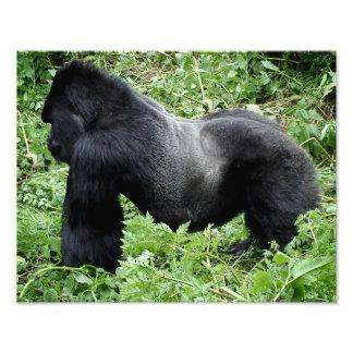 Impresión de la foto del gorila del Silverback Cojinete