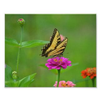 Impresión de la foto del jardín de la mariposa fotografías