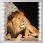 Impresión de la foto del león impresiones