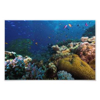 Impresión de la foto del mar de coral cojinete