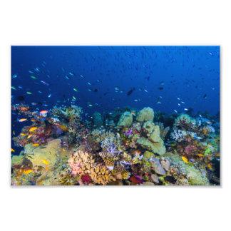 Impresión de la foto del mar de coral fotografía