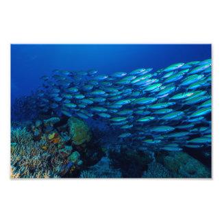 Impresión de la foto del mar de coral fotografías