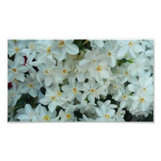 Impresión de la foto del narciso de Paperwhite