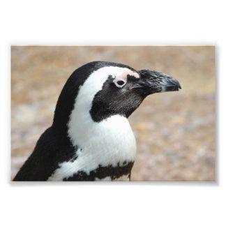 Impresión de la foto del perfil del pingüino fotografías