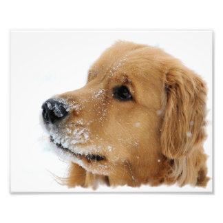 Impresión de la foto del perro de la nieve del gol fotografía