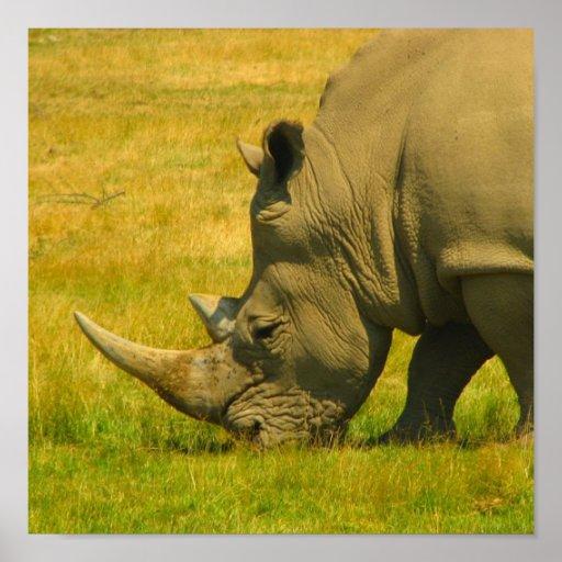 Impresión de la foto del rinoceronte posters