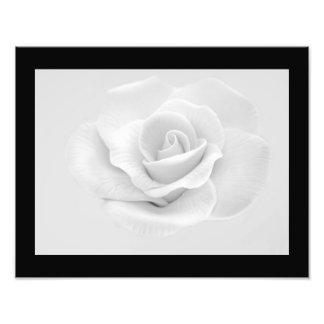 Impresión de la foto del rosa blanco