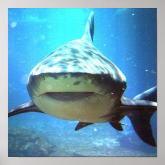Impresión de la foto del tiburón póster